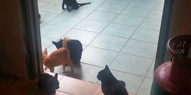 Jangan Melakak Kucing Di Dapur