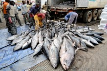 The country of origin is labeled as the country where the fish product is processed, not where it is caught.