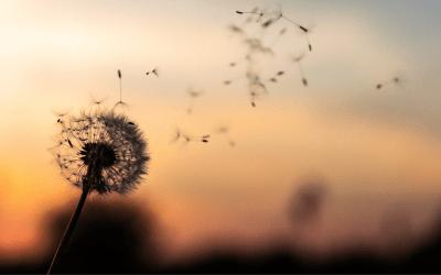 Uudet tuulet puhaltavat blogissa