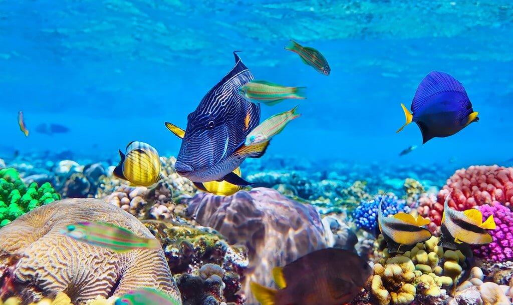 Mnoho vícebarevné ryby na žimu v blízkosti ostrova