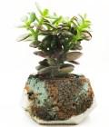 Concrete Planter Patina