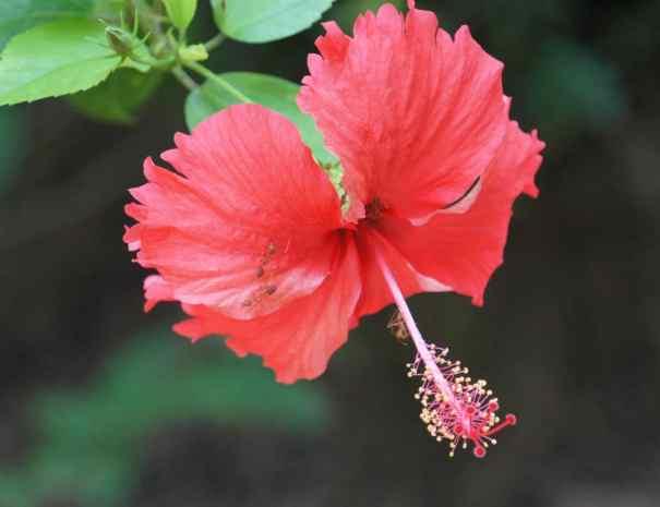 Flower in Phnom Kulen National Park