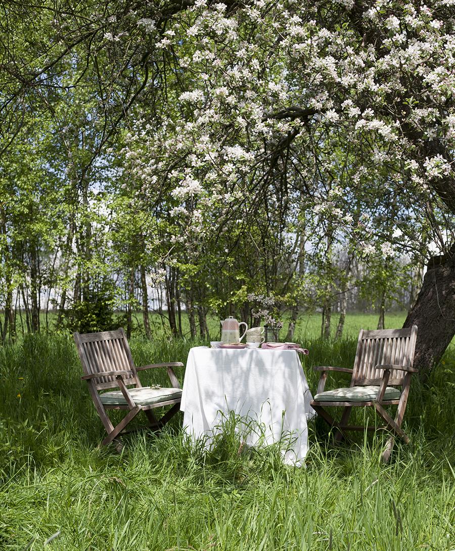 sniadanie pod kwitnacymi jabloniami