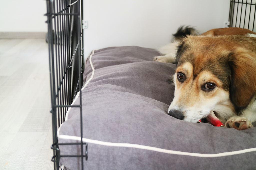 Kullakeks Fido Studio Hundebox Training
