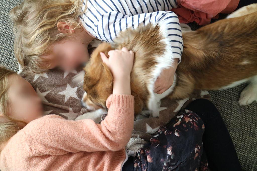 Familienleben // Ein Haustier für Kinder - kostenloser Tierschutzunterricht