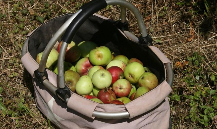 Von Äpfeln und Birnen und ganz viel Gras