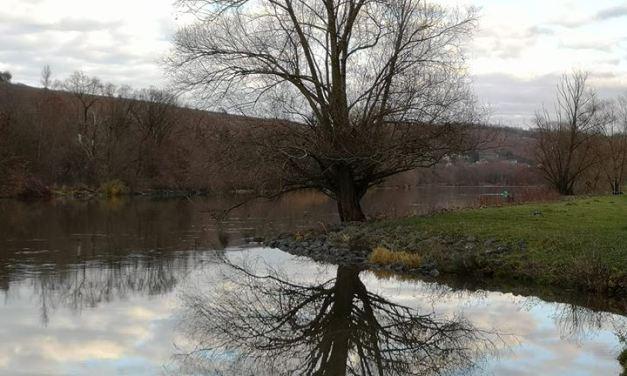 Die Bäume fallen