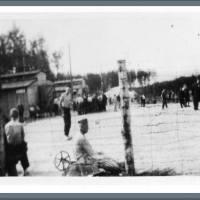 Die Macht der Bilder - Die Buchenwaldikone in der Analyse