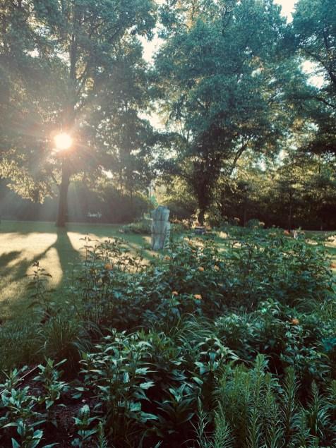 Morgensonne im Luitpoldpark