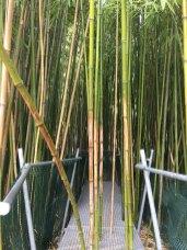 Eingang in den Bambuswald