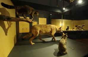 """Ausstellungsansicht """"Hund & Katz"""""""