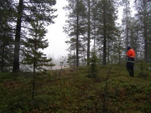 "Mer ""normalt"" arbetsväder, länge leve regnrocken! © Norrbottens museum."
