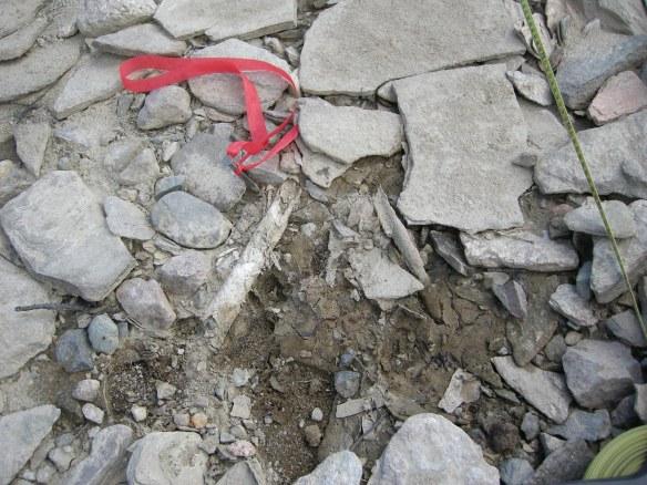 Ett av de hundratals benfragment som påträffats på Silbojokks strand.