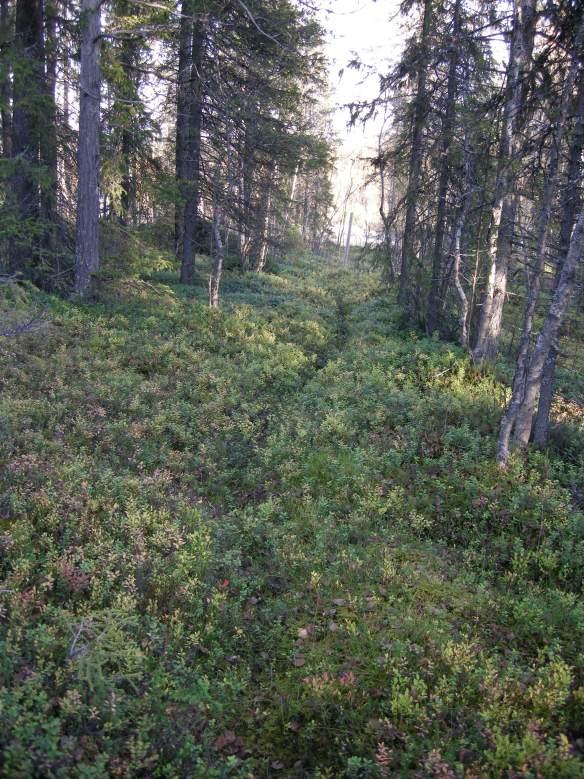 Fotografi på en stig i skogen