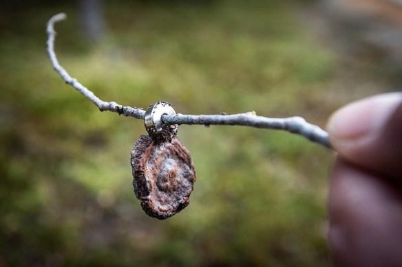 Järn i Norr - Vivungi - Första resan