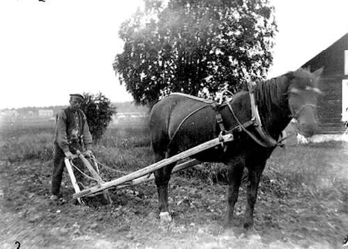 1975_1992_3_Fotografen Adolf Hjort harvar potatislandet , Alvik