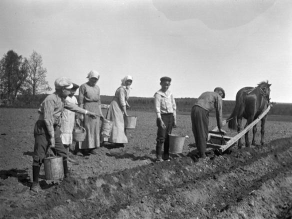 1986_907_Potatissättning på sandåkern nära begravningsplatsen. Fr. V Arne Nordberg, tre obekanta, Harald Östlund, Bror Östlind och hans häst