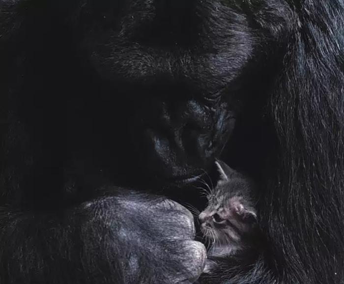 Коко со своим котенком Ол-Болл.
