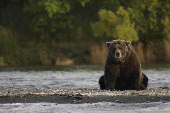 ひとりぼっちのクマ