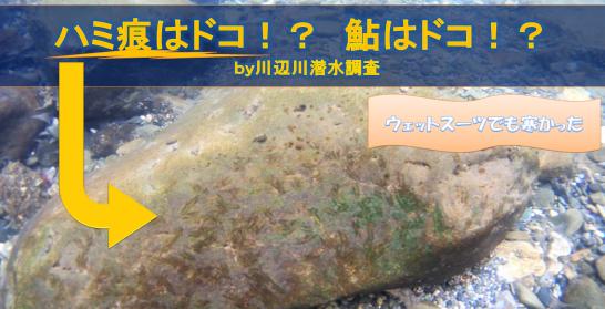 川辺川潜水調査