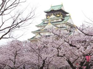 大阪城 桜 西の丸庭園