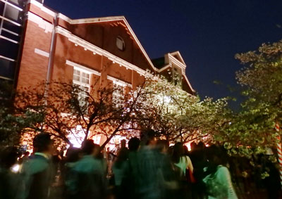 造幣局 桜の通り抜け ライトアップ