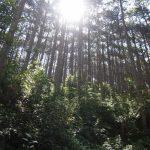 冬の熊野古道のおすすめは伊勢路!服装や気候は?12月伊勢路5泊6日歩きました