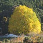 関西の紅葉ドライブコース!混雑なしの名所と穴場!熊野本宮大社の紅葉がオススメ
