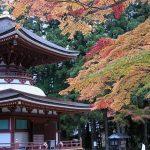 高野山と熊野古道のモデルコース!聖地巡礼バスで約4時間!
