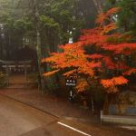 関西の紅葉ハイキングはどこへ?紅葉の名所や穴場の神社めぐりは?見ごろはいつ?