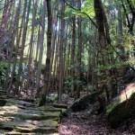 車で行ける熊野古道・伊勢路の初心者コース!石畳が美しい!海へ行けば世界遺産「鬼ヶ城」