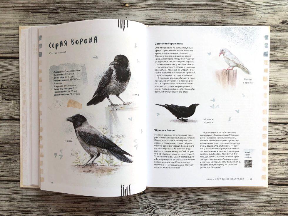 Очень красивая и полезная книга о птицах для детей - Птицы в городе 9