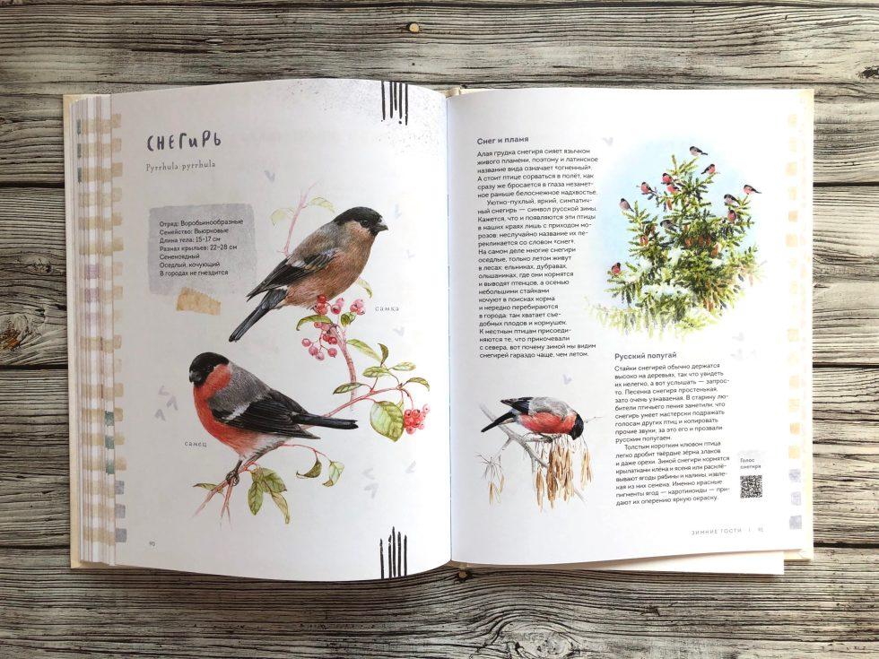 Очень красивая и полезная книга о птицах для детей - Птицы в городе 16