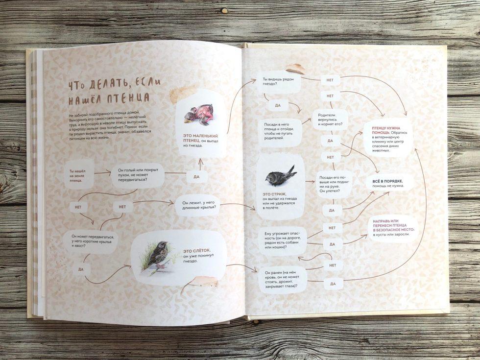 Очень красивая и полезная книга о птицах для детей - Птицы в городе 18