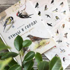 Очень красивая и полезная книга о птицах для детей - Птицы в городе 1