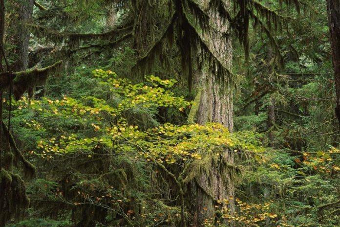 Какими магическими свойствами обладают деревья?