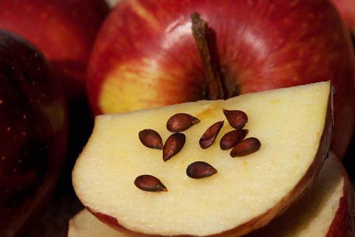 семечки яблока