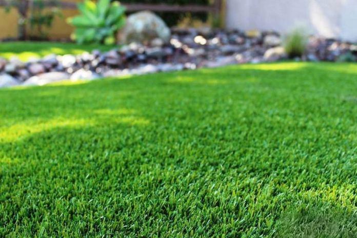 Шелковистый газон из полевицы