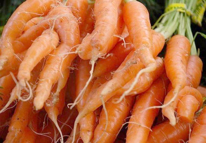 морковь рогатая