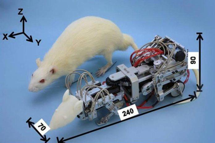 Японцы создали крысу-терминатора