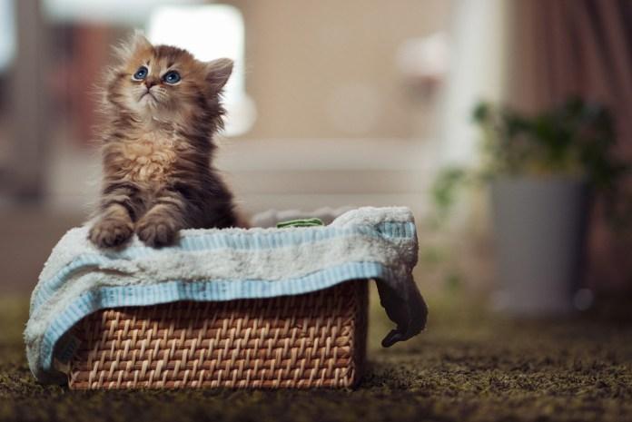 Кошки как домашний, независимый друг