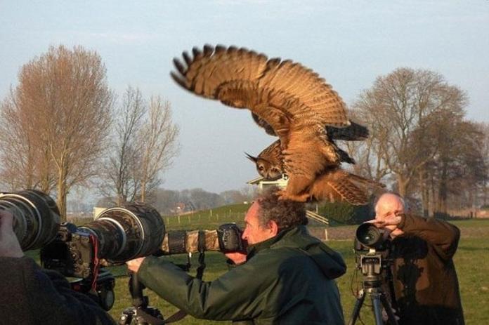 Знаменитый голландский филин любит приземляться людям на голову