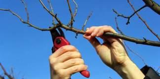 обрезать деревья в саду