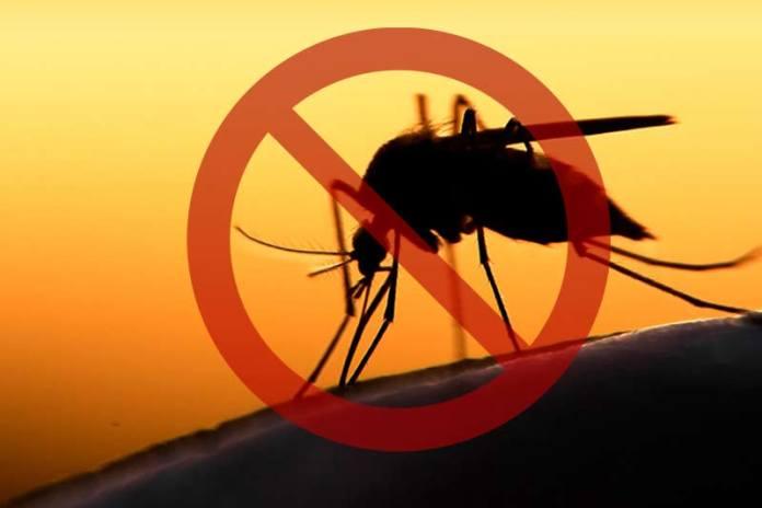 Ароматы, которые отпугнут комаров из вашего дома