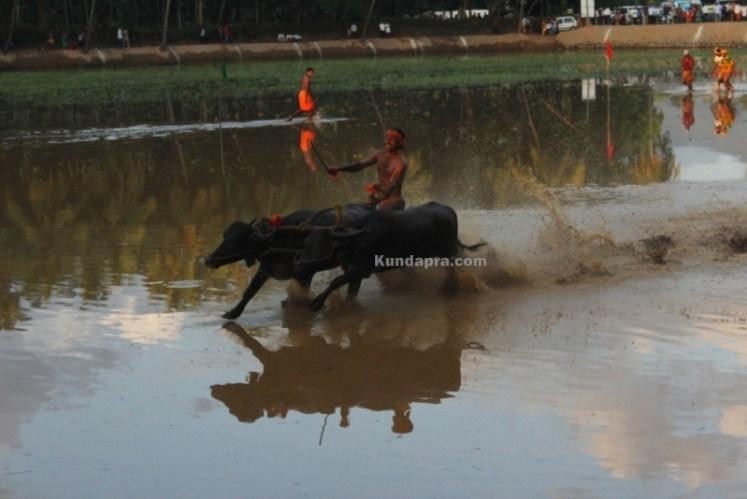 Byndoor Thaggarse Kambala  (2)