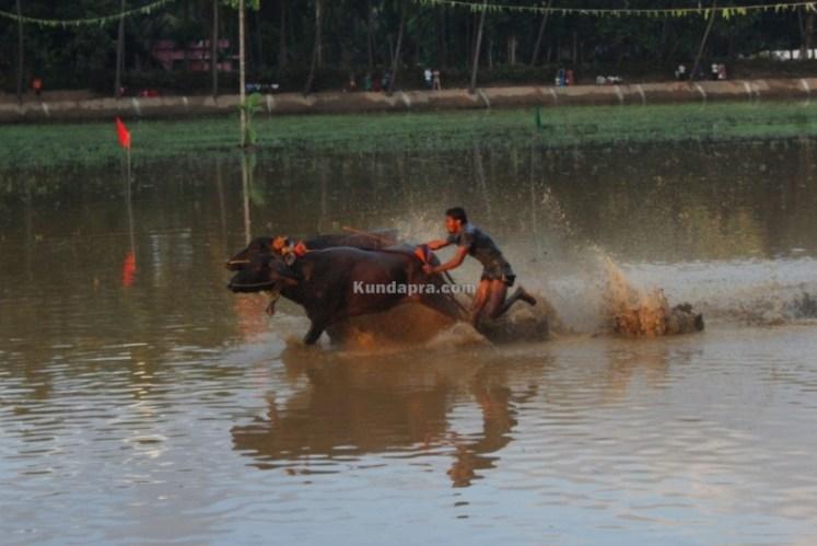 Byndoor Thaggarse Kambala  (4)