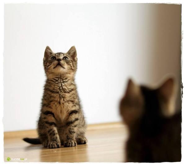 koty ksero