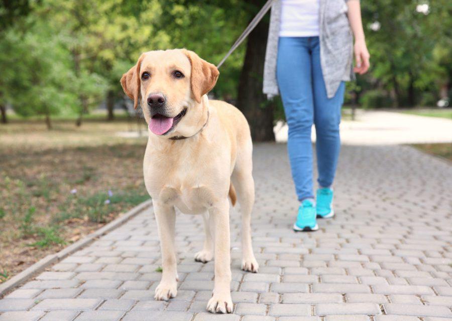 Ponte saludable, Consigue un perro y Activa tu mente