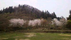 九里学園桜
