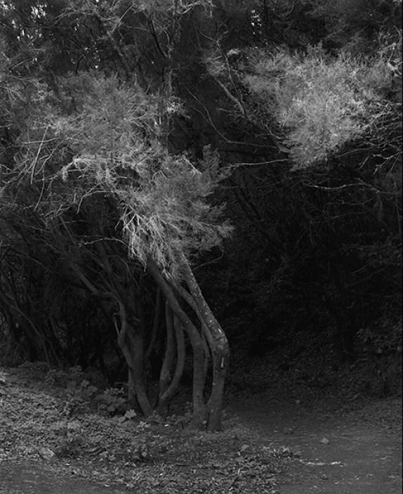awoiska-van-der-molen_351-7_2013
